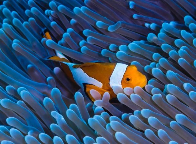 equilibrio cromatico, blu+arancio